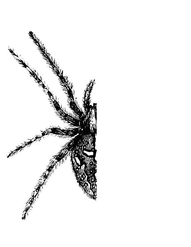 Half-Spider